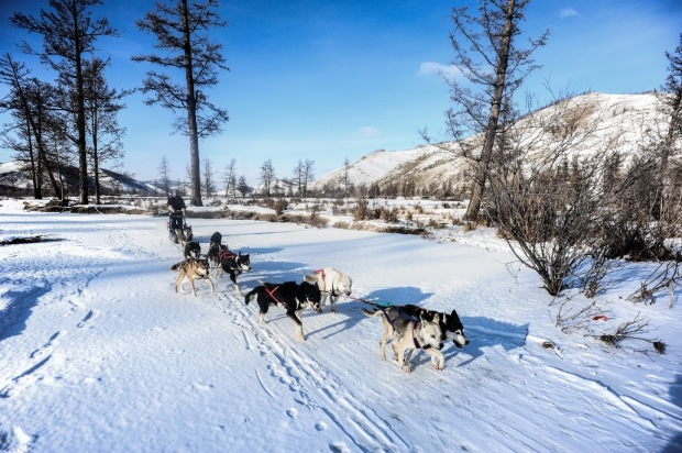 Husky Sledding - Photo from Sandbaggers